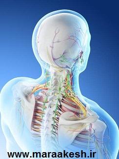 تصویر آناتومی گردن انسان برای درک راحتتر مشکل دیسک گردن و گردن درد